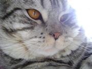 кота для вязки