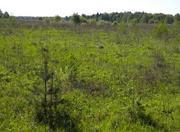 Земельный участок сельхозназначения вблизи деревни Красногор Переславс