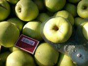 Продается плодоносящий яблоневый сад в Крыму 4, 8 Га