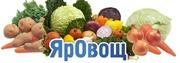 ЯрОвощ   Доставка овощи,  фрукты,  салаты,  свежая зелень.   Доставка